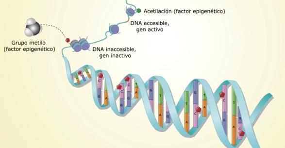epigenetica Doctor Dinu
